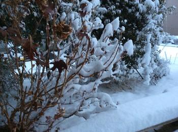 雪3.jpg
